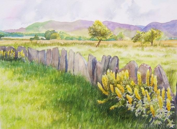 Over the garden wall (Snowdonia series)